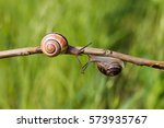 Two Snails Crawling Towards...