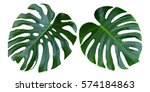 two tropical jungle monstera... | Shutterstock . vector #574184863