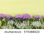 wild white small inflorescence...   Shutterstock . vector #574388023