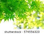 leaves of fresh green. leaves... | Shutterstock . vector #574556323