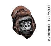 Head Gorilla Vector Color...