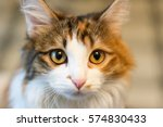 portrait of cat close up on... | Shutterstock . vector #574830433
