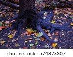 Small photo of Blacken Tree Roots