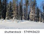 winter forest | Shutterstock . vector #574943623