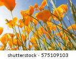 California Poppy Flower In An...