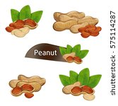 peanut kernel in nutshell with... | Shutterstock .eps vector #575114287