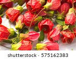 beautiful red flowers of mallow ... | Shutterstock . vector #575162383