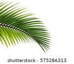Small photo of palm leaves isolated on white background