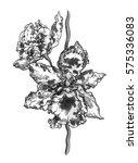 tropical white orchid flower... | Shutterstock . vector #575336083