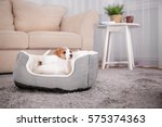 cute funny puppy in dog bed at... | Shutterstock . vector #575374363