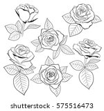 vector set of detailed ... | Shutterstock .eps vector #575516473