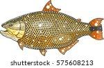 salminus brasiliensis | Shutterstock .eps vector #575608213