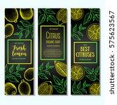 citrus vertical banner... | Shutterstock .eps vector #575623567
