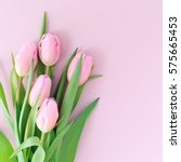 Pink Tulips On The Pink...
