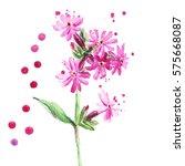 pink wild flower  watercolor... | Shutterstock . vector #575668087