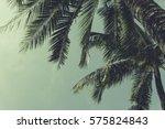 Coconut Palm Trees  Beautiful...