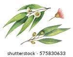 watercolor hand painted set...   Shutterstock . vector #575830633
