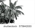 Black And White Tropical Palm...