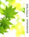 leaves of fresh green.leaves of ... | Shutterstock . vector #575917663