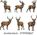 Deer  Deer Figure  Vector ...