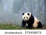 giant panda | Shutterstock . vector #575958973