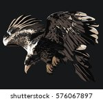 eagle   detailed realistic... | Shutterstock .eps vector #576067897