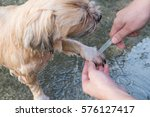 hybrid dog bathing and grooming ... | Shutterstock . vector #576127417