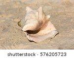Conch Shell On Sandy Beach ...