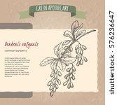 berberis vulgaris aka common... | Shutterstock .eps vector #576236647