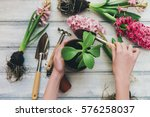 Woman's Hands Planting Spring...