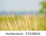 Prairie Grass Waterside