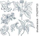 detailed plant sketch | Shutterstock .eps vector #576299713