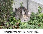 Cat In A Garden Iii