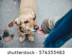 woman feeding a dog in the... | Shutterstock . vector #576355483