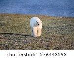 polar bear in dark and lifeless ... | Shutterstock . vector #576443593