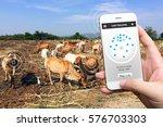 Animal Tracking Monitoring In...