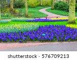 Blue Flowers Hyacinths Growing...