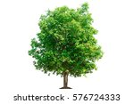 Tree On White Background Of...