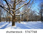 Winter theme - trees in a park covered with snow over blue sky - stock photo
