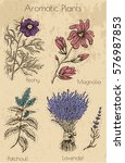 graphic set with aromatic... | Shutterstock .eps vector #576987853