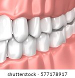 teeth gum human mouth anatomy   ... | Shutterstock . vector #577178917