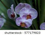purple flowers | Shutterstock . vector #577179823
