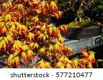 Fire Foliage