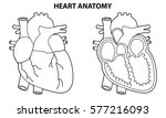 heart anatomy outline... | Shutterstock .eps vector #577216093