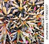 yellow green leaf digital... | Shutterstock . vector #577302157
