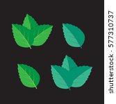mint green vector illustration... | Shutterstock .eps vector #577310737