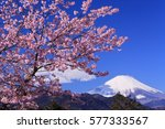 early bloomer cherry blossoms... | Shutterstock . vector #577333567