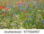 Wildflower Meadow With Poppies...