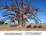 baobab | Shutterstock . vector #577525987