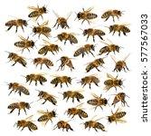 group of bee or honeybee in... | Shutterstock . vector #577567033